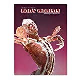 Exhibition Catalog BODY WORLDS (Spanish)
