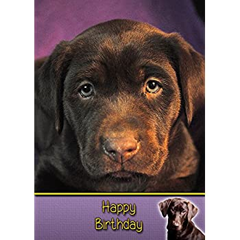 Chocolate Labrador Birthday Card 8x55 Mix Match On 8x55