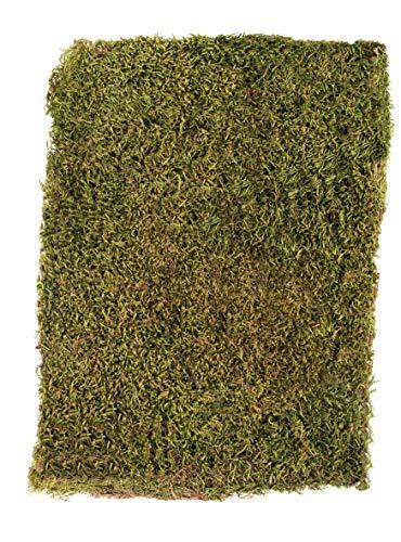 Rayher 8508300, séché, sachets de mousse 100 g, de la mousse, vert/marron, 29 x 23 x 5 cm