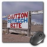 Danita Delimont - Route 66 - Rock Shop, Route 66, Holbrook, Arizona, USA - US03 JMR0056 - Julien McRoberts - MousePad (mp_142395_1)
