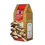 Fungo Box Natalizio: il Kit per Coltivare in Casa Funghi Ostrica (Commestibili e Buoni), dai Fondi del Caffè espresso. Il regalo più originale (e saporito) del natale 2017