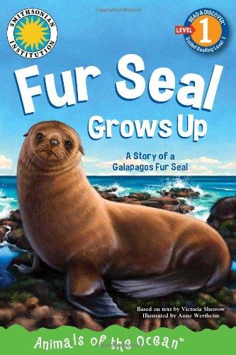 Fur Seal Grows Up: A Story of a Galapagos Fur Seal