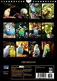 Wilde Wellensittiche (Wandkalender 2017 DIN A4 hoch): Wunderschöner Wellensittichkalender mit atemberaubend schönen und farbenprächtigen Fotografien … (Monatskalender, 14 Seiten ) (CALVENDO Tiere) - 14