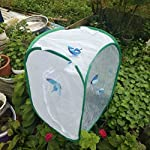 sgerste 2 colors praying mantis stick insect butterfly cylindrical pop-up cage mesh - white, 40 x 40x 60cm SGerste 2 Colors Praying Mantis Stick Insect Butterfly Cylindrical Pop-up Cage Mesh – White, 40 x 40x 60cm 51vxU7RtLqL