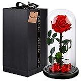 FunPa Ewige Rose Rot, SchöNheit Und Das Tier Blume In Glas Konservierte Blume Frauen Mädchen Valentinstag Geburtstag Hochzeit
