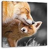 süße kuschelnden Füchse schwarz/weiß, Format: 60x60 auf Leinwand, XXL riesige Bilder fertig gerahmt mit Keilrahmen, Kunstdruck auf Wandbild mit Rahmen, günstiger als Gemälde oder Ölbild, kein Poster oder Plakat