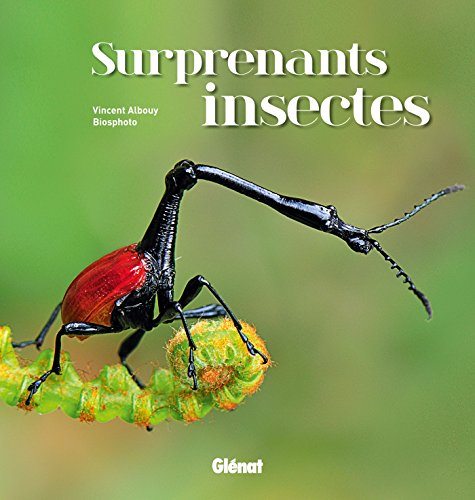 Surprenants insectes par Vincent Albouy