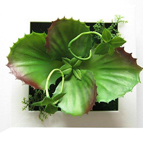 sunnymi Wandaufkleber Wandsticker Wandtattoo 3D Schöne Grüne Saftiges Pflanze, Wohnzimmer Schlafzimmer Entfernbare Wandbilder Tapete 3D Blick (F, mehrfarbig)