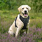 Rabbitgoo No-Pull Hundegeschirr einstellbar weich Hundegeschirr Haustier einfach sicher Kontrolle Körper bequem Hunde Leine für große Hunde schwarz