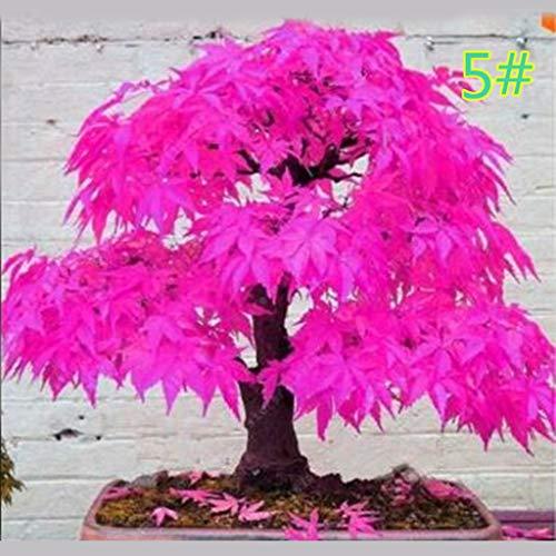 Junlinto, 20 Stücke Japanischen Ahorn Samen Bonsai DIY Pflanze Blumentopf Bunte Blätter Kreative Haushalt Haus Mini Gartenarbeit Decor 13