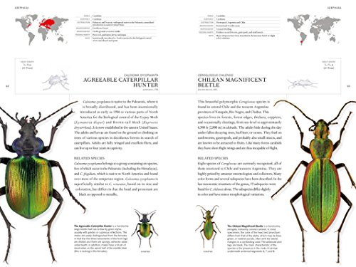 The Book of Beetles: A Life-Size Guide to Six Hundred of Nature's Gems (Book Of Series)