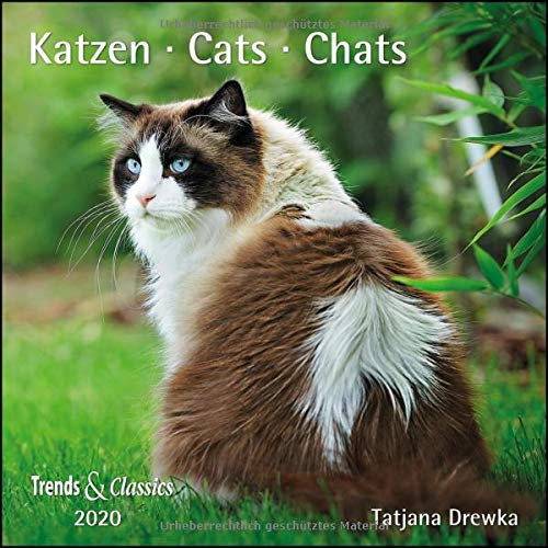 Katzen Cats 2020 - Broschürenkalender - Wandkalender - mit herausnehmbarem Poster