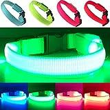 EXPERSOL LED-Hundehalsband, superhell, batteriebetrieben, erhöhte Sichtbarkeit und Sicherheit, 4 Farben (grün, klein)
