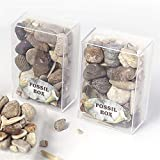 ZMCW 1 Box Mixed Fossil Ore Specimens Wissenschaft Mineral Rock Museum Lehre Kies Probenmaterialien Naturstein, 1Pc Random