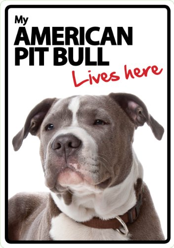 Magnet & Stahl Zeichen, American Pit Bull Lives Here -