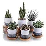 T4U ComSaf Pot de Succulent en Céramique avec Plateau en Bambou 7CM Lot de 6, Cactus Plante Planteur Cache Pot Jardinière Contenant Décoration de Maison Bureau Cadeau pour Anniversaire Mariage