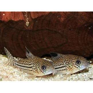 TM Aquatix Aquarium Sand Natural Fish Tank Gravel Plant Substrate (5kg, Light 2-3mm) 16