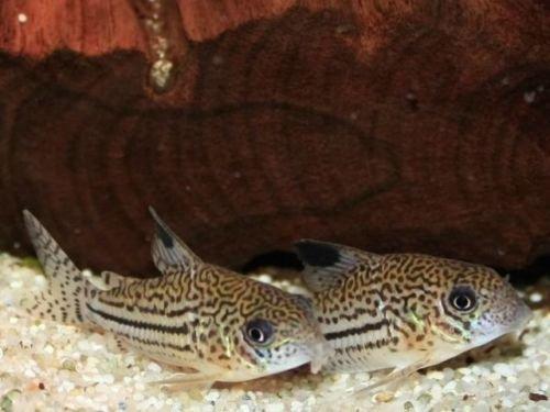TM Aquatix Aquarium Sand Natural Fish Tank Gravel Plant Substrate (5kg, Light 2-3mm) 1