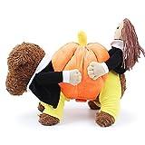 Fit en Everyway maniquí de Creative divertido disfraz de mascota Perro Ropa De Abrigo Con Lovely Puppy holding calabaza