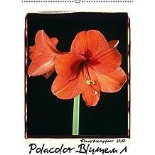 Polacolor Blumen 1 (Wandkalender 2017 DIN A2 hoch): Blumen Stilleben im Polacolor Retro Stile, Fotokunst (Monatskalender, 14 Seiten) (CALVENDO Kunst)