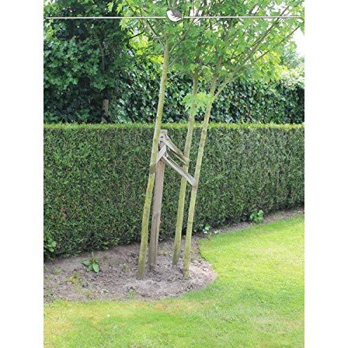 Gardline - Lebensbaum Thuja plicata Martin 80-100 cm, Wurzelballen | Ab 10 St. + inkl. Versand - 25 St.