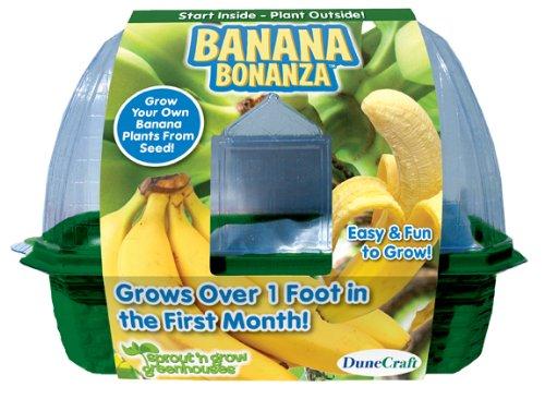 dune-craft-banana-bonanza-kit-per-piantare-e-coltivare-una-pianta-di-banane