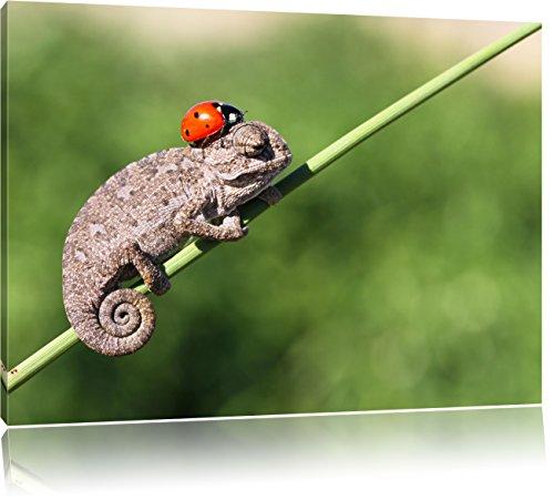 Dolce Gecko con una coccinella, dimensioni: 80x60