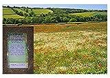 Gras & Wildblumensamen. Traditionelle Wiesenmischung 400 Gramm. MeadowMania Heimische Samen. bedecken bis zu 100 m².
