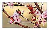 Wallario Herdabdeckplatte / Spritzschutz aus Glas, 1-teilig, 90x52cm, für Ceran- und Induktionsherde, Frühlingsgefühle I - Kirschblüten in Nahaufnahme