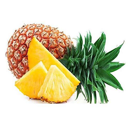 ELLEA Gartensamen-Ananas \'Corona\' Sommer Köstliche Frucht Samen Zwerg Ananas Pflanzen Baum Obstbaum Samen Obst Seltene Bonsai Samen Für Hausgarten Pflanzen (20)