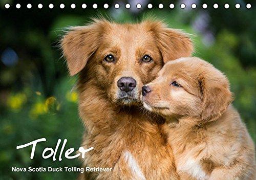 Toller - Nova Scotia Duck Tolling Retriever (Tischkalender 2018 DIN A5 quer): Ein Kalender mit 13 wunderschöne Fotos von Novia Scotia Duck Tolling ... ... [Kalender] [Apr 01, 2017] Auerbach, Anna (Retriever Scotia Nova Tolling Duck)