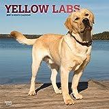 Yellow Labrador Retrievers - Weiße Labradore 2019 - 18-Monatskalender mit freier DogDays-App (Wall-Kalender)
