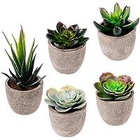 suchergebnis auf f r kakteen und sukkulenten kunstblumen pflanzen. Black Bedroom Furniture Sets. Home Design Ideas