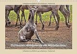 Dülmener Wildpferde im Münsterland (Wandkalender 2018 DIN A3 quer): Lustige und außergewöhnliche Momente mit den Wildpferden im Merfelder Bruch (Monatskalender, 14 Seiten ) (CALVENDO Tiere)