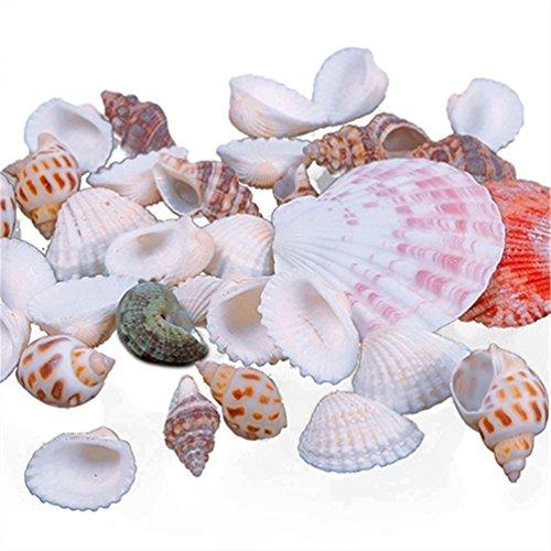 bismarckbeer 100g gemischte Strand Muscheln Fisch Tank Aquarium Dekorationen Foto Requisiten