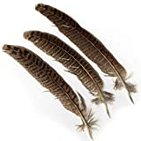 Artemio 24-Piece Smooth Feathers, Natural Colour, Brown