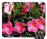 Gaming-Mauspads, Mauspad, Mandevilla Bell-geformter Trichter-Blumen-Blüten-Blüte