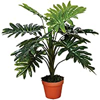 Catral Planta artificial filodendro 70 cm altura, 74010013