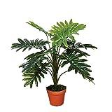 Catral Germania Decorazione, pianta filodendro 70cm, Verde, 70x 15x 15cm, 74010013