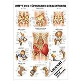 Hüfte und Hüftgelenk Lehrtafel Anatomie 100x70 cm medizinische Lehrmittel