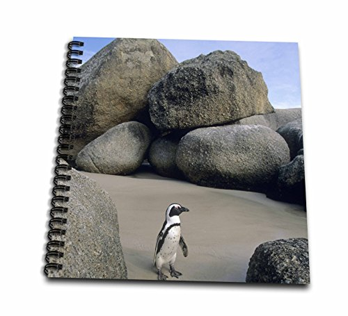 3drose-african-penguin-cape-peninsula-south-africa-af42-ksc0009-kevin-schafer-mini-notepad-4-by-4-db