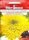 Topf-Sonnenblumen, Helianthus annuus, ca. 50 Samen