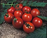 Just Seed - Vegetable - Tomato - Alicante - 50 Seed - Economy Pack