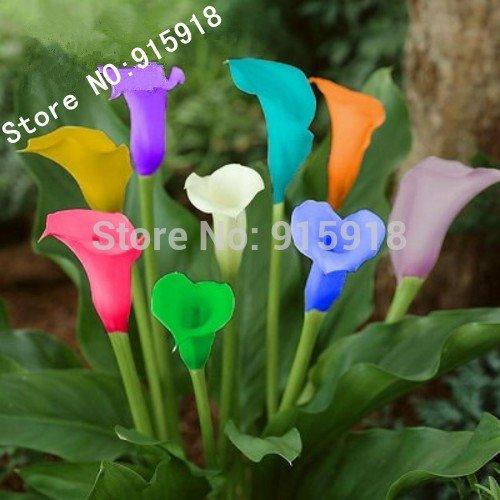 Graines de fleurs 100 PC bonsaï calla coloré semences lys, plantes rares fleurs SeedsAndPlants jardinage bricolage