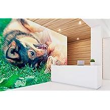 Fotomural Vinilo para Pared Perro y Gato | Fotomural para Paredes | Mural | Vinilo Decorativo