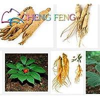 Verde del ejército: paquete original 10 piezas chino Hardy Panax Ginseng Corea Semillas de ginseng King Of Herbs Plantas Inicio Frutas y verduras de alta nutrición