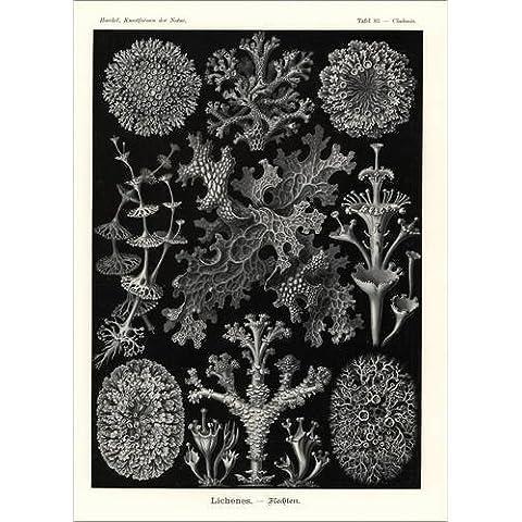 Stampa su tela 30 x 40 cm: Lichens di Fotofinder.com
