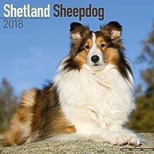 Shetland Sheepdog Calendar 2018 (Square)