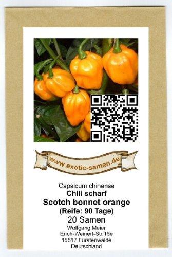 Seltene, sehr scharfe Chili-Sorte mit Aprikosenaroma - Scotch Bonnet orange - 20 Samen