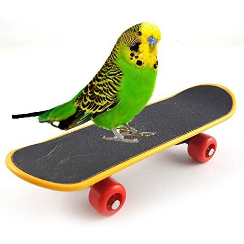 Bird Parrot Intelligenz Spielzeug Mini-Skateboard Training für Parrot Wellensittich Sittich Nymphensittich Unzertrennliche Sittiche Kleine und mittelgroße Bird Funny Sitzstange Spielzeug